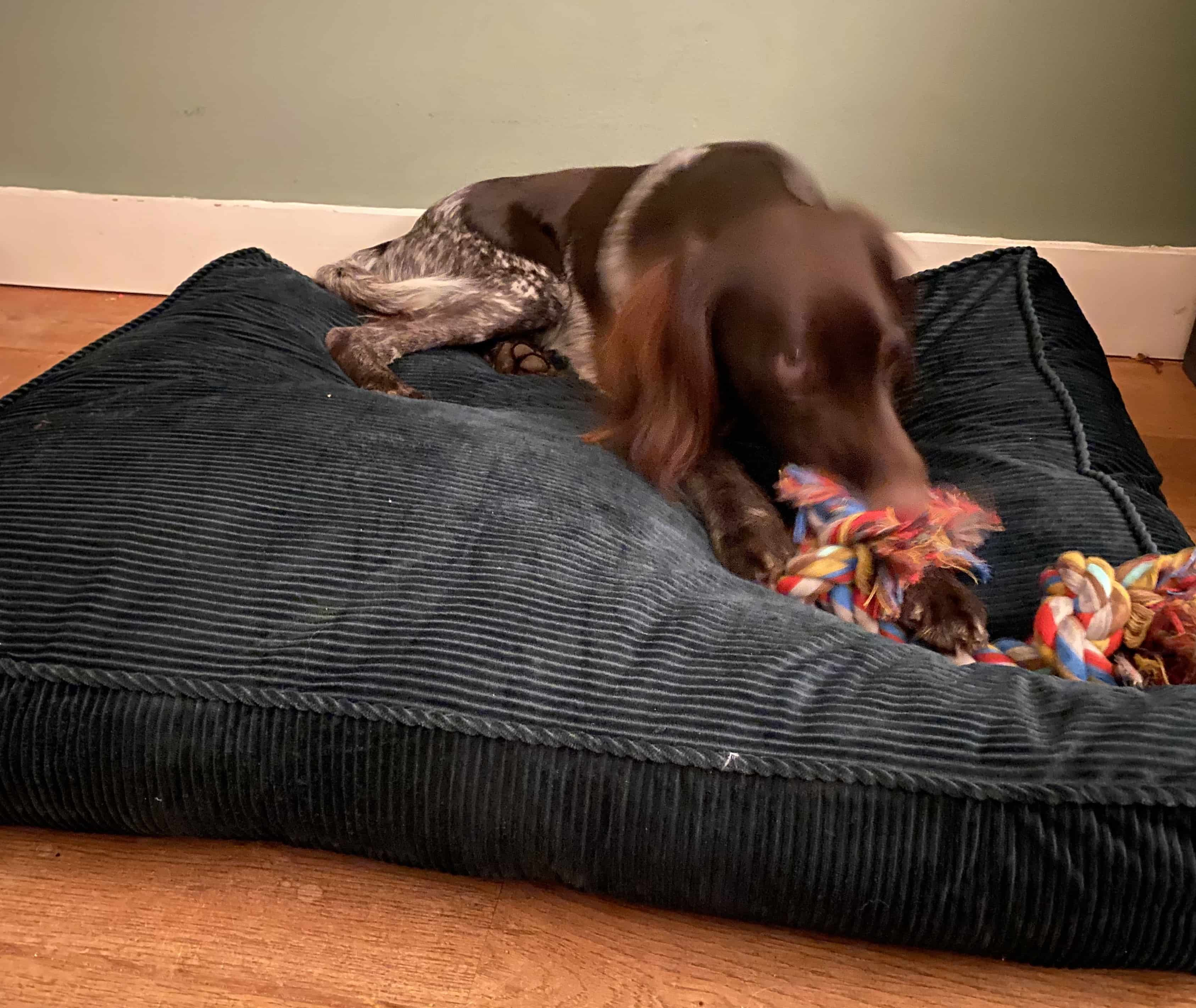 4Goodz hondenkussen rechthoek velours 70x90x15 cm - Donkergroen
