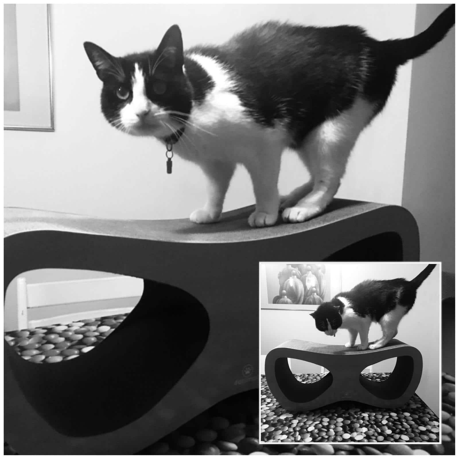 4animalz Lounge Black - kartonnen krabpaal voor katten - 69x24x29cm